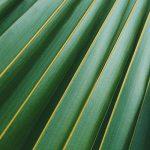 Maxifleur künstliche Pflanzen – so kamen wir zu unserem Dschungel
